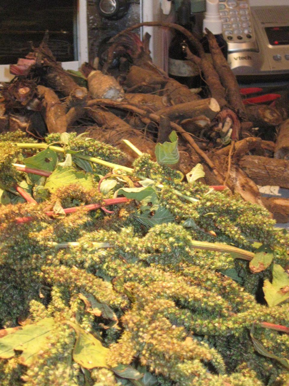 Burdock Root Seeds Amaranth And Burdock Roots