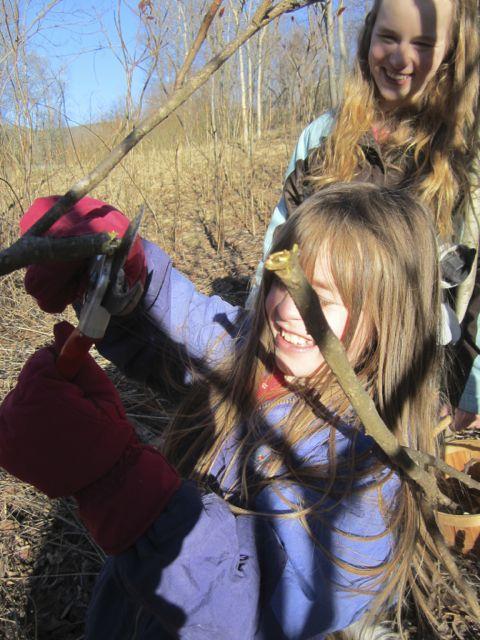 Hannah cutting Sumac branches f