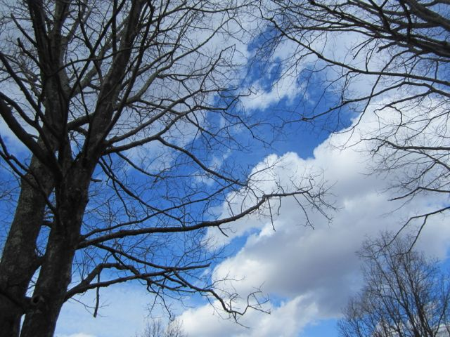 Clouds floating in the stunning blueness above the naked tree limbs...speechless.