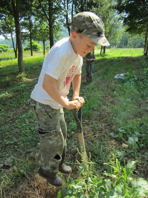 Digging Dandelion roots is best done by energetic boys. Josiah is for hire, his price? Sweet Frog.